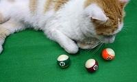 bolas pool chicas